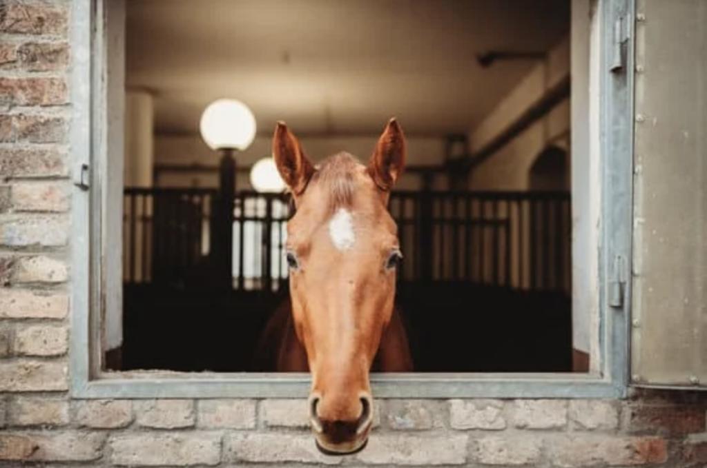 horse-window