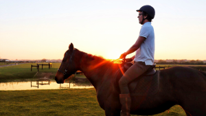 online horse training course