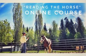 Reading the Horse Body Language Online Course